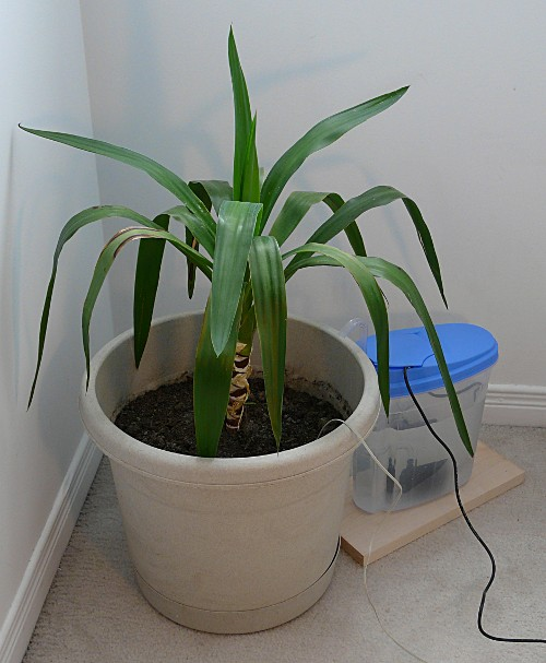 Tuxgraphics Org Remote Flower Watering And Monitoring