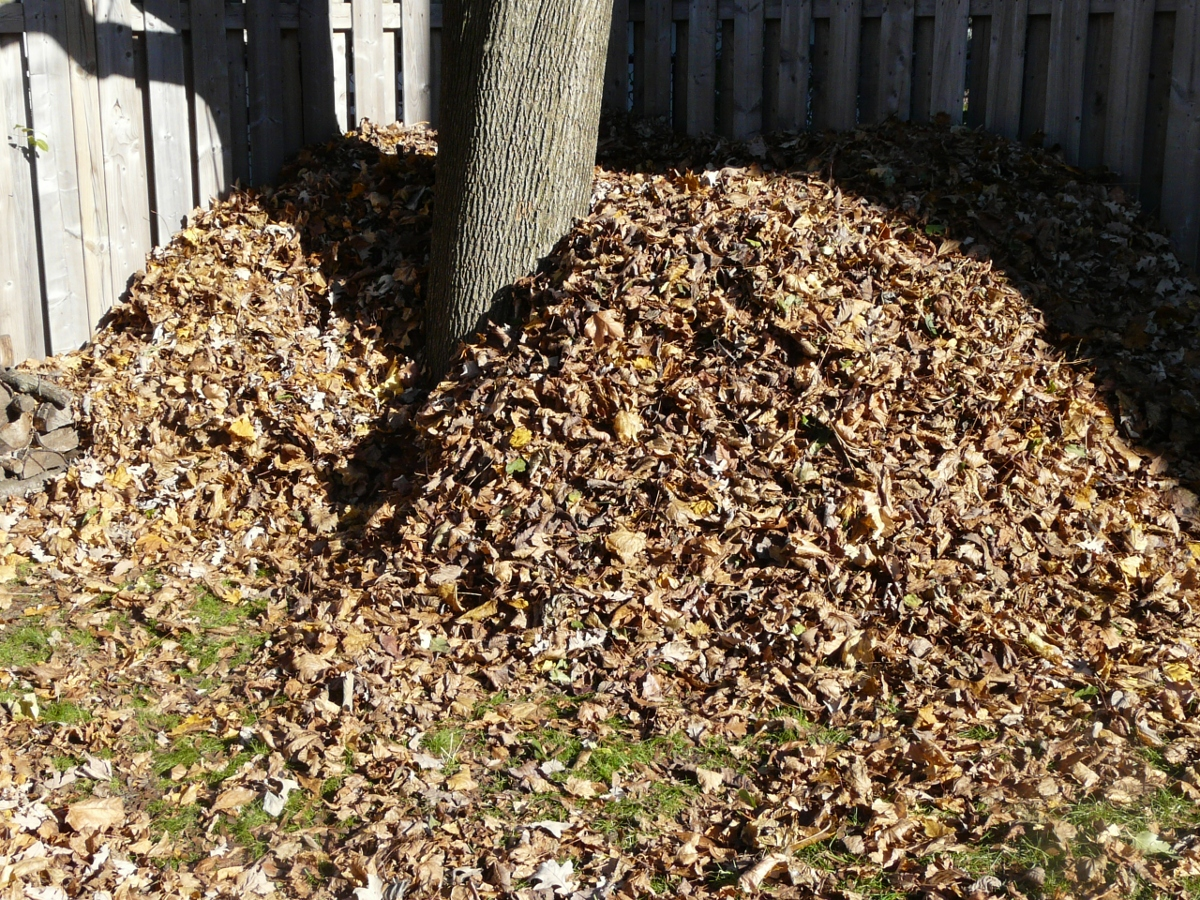 Compost: No more leaf bagging